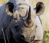 Découverte Afrique du Sud 5