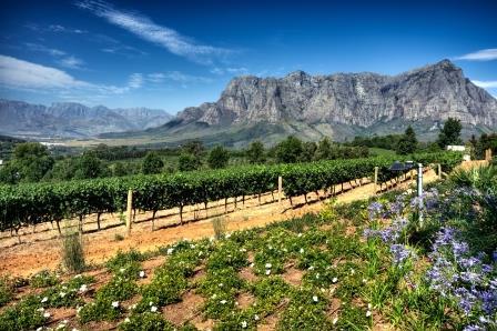 Découverte Afrique du Sud 6